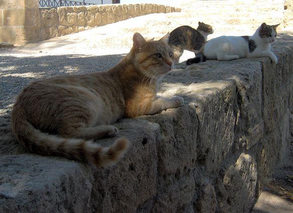Кошки в Лимасоле