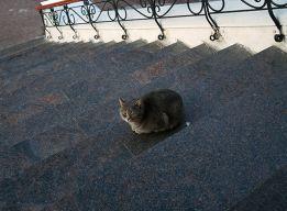 Соборный кот