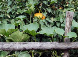 Яблонно-тыквенный этюд