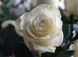 Розы для Блаженной